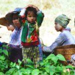 Contadine in Myanmar